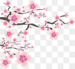 Cherry Blossom Tree Drawing Free Download 2586 2586 2 44 Mb