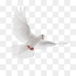 Dove Png Free Download Dove Icon Wedding Icon In additon, you can discover our great content using our search bar above. dove png free download dove icon